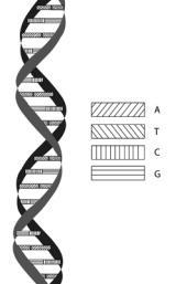 El ADN una herramienta de gran alcance para investigar interacciones ecológicas entre hongos y árboles a nivel de la raíz