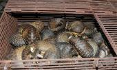 Los murciélagos no son los villanos en el drama del Coronavirus