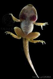 Importancia de conocer y conservar a los anfibios