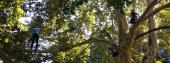 Los arbolistas o el arte de cuidar los árboles urbanos