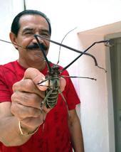El escarabajo arlequín