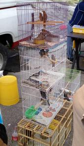 Las aves silvestres no son mascotas