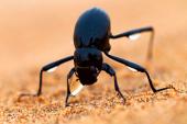 Biomimetismo: innovación inspirada en la naturaleza