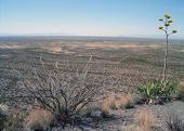 Secuestro de carbono en los desiertos de México