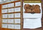 Las colecciones biológicas, tesoros que debemos conservar