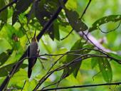 Redes de interacciones planta-colibrí