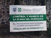 Controlando el muérdago en CDMX