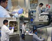 Conociendo a los hongos fitopatógenos