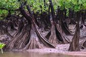 Ecosistema de manglar: dilema de valorar las funciones ecológicas
