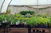 Las patas de elefante, plantas veracruzanas ahora protegidas internacionalmente