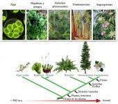 ¿De dónde vienen las plantas?